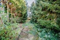 Garten (Bäume werden entfernt)