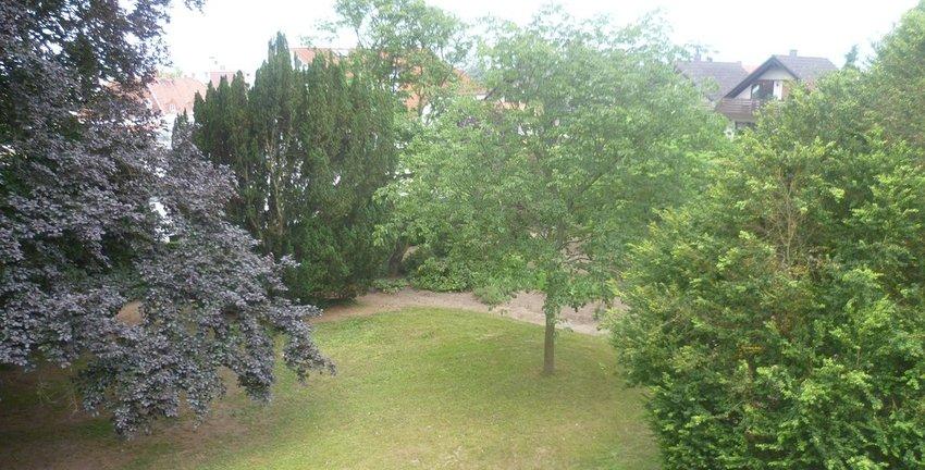 Blick in den Garten (1)